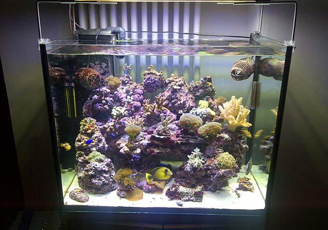 Soluzioni per illuminare un acquario a led by roberto chirio